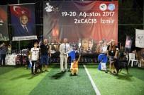 Bayraklı'da Köpek Irkları Yarıştı