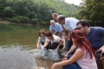 SU ÜRÜNLERİ - İstanbul'daki Göletlere 111 Bin Yavru Sazan Balığı Bırakıldı