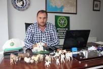 KURBAN BAYRAMı - Kurban Keseceklere' Küçükbaş Hayvan' Tavsiyesi