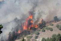 ORMAN YANGINI - Oltu'da Orman Yangını