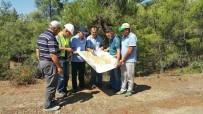 ESTETIK - Ormanlarda Gençleştirme Çalışmaları Başladı