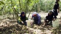 Fındık İşçileri, Sakarya'daki Kazanın Son Olmasını İstiyor
