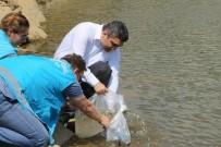 AYNALı SAZAN - Yakuplar Göleti'ne 2 Bin Adet Sazan Balığı Yavrusu Bırakıldı