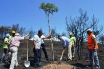 ENDEMIK - Yangında Kararan Orman Yeniden Yeşertiliyor