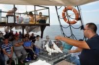 ŞANLIURFA - Güvercin Sevdası Denizlere Taştı