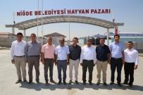 HAYVAN PAZARI - Niğde Belediyesi Kurban Bayramı'na Hazır