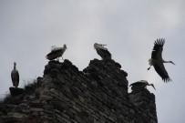 EDIRNEKAPı - Topkapı Surlarında Göç Molası