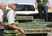 PARA CEZASI - Suriye'ye Götürülürken Yakalanan Saka Kuşları Doğaya Bırakıldı