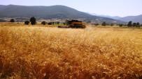 TARıM - Buğday Hasadında Dane Kaybı Düştü, 3,2 Milyon Lira Kazanç Sağlandı