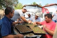 HERCAI - Çiçekleri 'Şaşırtma' Yöntemiyle Yetiştiriyorlar