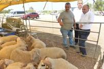 ÇIĞLI BELEDIYESI - Çiğli'de Bayram Hazırlığı Tamam