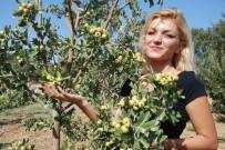 KIRAÇ - Kıraç arazilerde alternatif ürün oldu