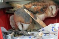 BELGRAD ORMANı - Tedavisi Tamamlanan 4 Yabani Hayvan Doğaya Salındı