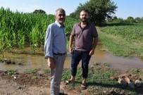 ALI KıLıÇ - Tarlalarını Su Basan Çiftçiler Yetkililerden Yardım İstedi