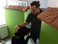 KÖPEK OTELİ - 10 Günlük  Bayram Tatili Köpek Otellerine Olan Talebi Patlattı