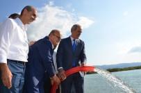 BALIK TÜRÜ - 200 Bin Yavru Sazan İznik Gölü İle Buluştu