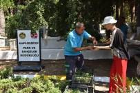 GÜZELBAĞ - Alanya Belediyesi Mezarlıklarda 44 Bin 220 Adet Ücretsiz Çiçek Dağıtacak