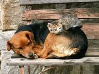 İHBAR HATTI - Hayvanseverlerden Tatil Uyarısı