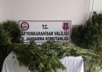 AFYONKARAHISAR BELEDIYESI - Kardeşliğin 10.Yılı Park Afyon'da Kutlanıyor
