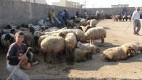 Mardin'de Kurbanlıklar Görücüye Çıktı