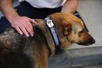 KEMERBURGAZ - Sokak Köpeklerine 'Reflektörlü Tasma' Takıldı