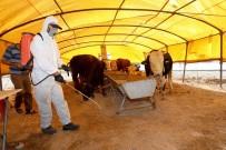 KURBAN PAZARI - Talas'ta Kurban Pazar Yerleri İlaçlandı