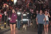 POLİS KÖPEĞİ - Bodrum'da 250 Polis İle Barlar Sokağında Huzur Operasyonu