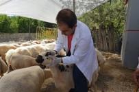 YAKıNCA - Yeşilyurt'ta 12 Farklı Noktada Kurban Satış-Kesim Yerleri Oluşturuldu