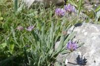 ENDEMIK - Amasya Bitki Zengini