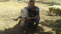 Midyat'ta Kurbanlıklar Satışa Çıktı