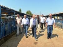 KURBAN PAZARI - Nilüfer Kurban Bayramı'na Hazır