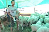 KURBAN PAZARI - Sinop'ta Kurban Pazarı Açıldı