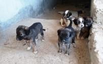 KÖPEK YAVRUSU - 7 Tane Yavru Köpeği Çuvalla İnşaata Attılar