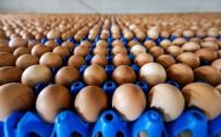 DÜNYA SAĞLıK ÖRGÜTÜ - Milyonlarca yumurta raflardan kaldırıldı