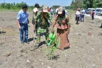 ETIYOPYA - Mersin'de Afrikalı Ormancılara Ormancılık Eğitimi Verildi