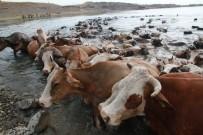 MEHMET ARSLAN - Murat Nehri'nde Kaybolan Nişanlı Kızın Cesedi Bulundu