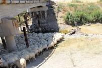 İBRAHIM ÇELIK - Sakarya Nehri Kurudu Hayvanlar Telef Oldu