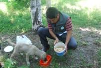 Sokak Hayvanları İçin Parklara Su Ve Yem Kabı Bırakıldı