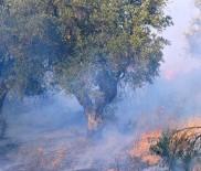 BILIRKIŞI - Elektrik Hatlarından Çıkan Yangınlara Emsal Karar Aydın'dan