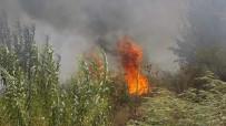 ZEYTINLIK - Karpuzlu'da 10 Dönüm Zeytinlik Alan Yangında Zarar Gördü
