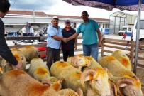 RECEP ŞAHIN - Biga'da Canlı Hayvan Borsası Canlandı