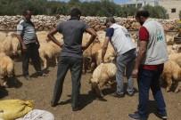 GIDA SIKINTISI - İHH Suriye'de Kurbanlık Alımlarını Tamamladı