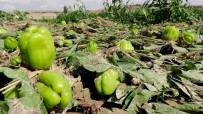 Aksaray'da Tarımı Sel Ve Dolu Vurdu