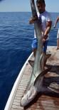 KÖPEK BALIĞI - Antalya'da 5 Metrelik Köpek Balığı Oltaya Takıldı