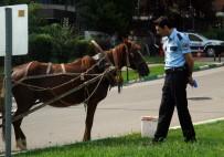 MERINOS - At Arabası İle Ekip Otosuna Çarptı