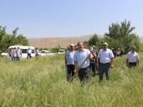 ÇARDAKLı - Erzincan'da İlk Kez İtalyan Çimi Alternatif Yem Bitkisi Tarla Günü Düzenlendi