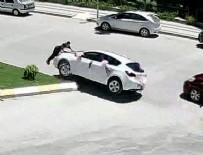 GELİN ARABASI - Gelin arabasının önüne yattı, ölümden döndü