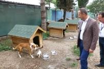 UZUV - Ordu'da Sokak Hayvanları Emin Ellerde