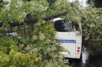 AYDINLATMA DİREĞİ - Aydında, Ağaç Yolcu Minibüsünün Üstüne Devrildi