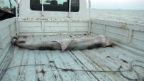 İÇEL İDMANYURDU - Dev Yunus Balığı Karaya Vurdu